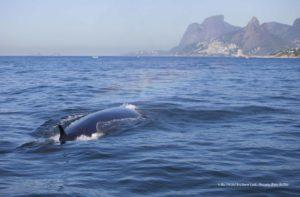 baleia de bryde pedra da gavea BIA HETZEL